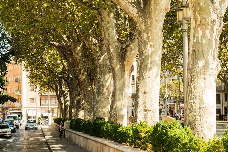 Trees-LaRambla-Figueres