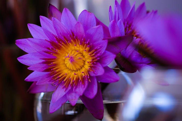 Flower-Sri-Lanka
