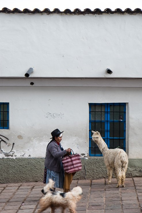 Outside Hotel Mercado, a woman with a dog passing an alpaca, Cusco, Peru
