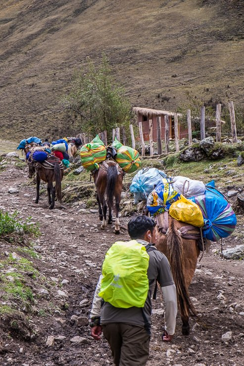 Horses along the walk up to the Salkantay Pass