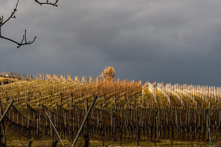Grey skies over winter vineyards in Andlau.