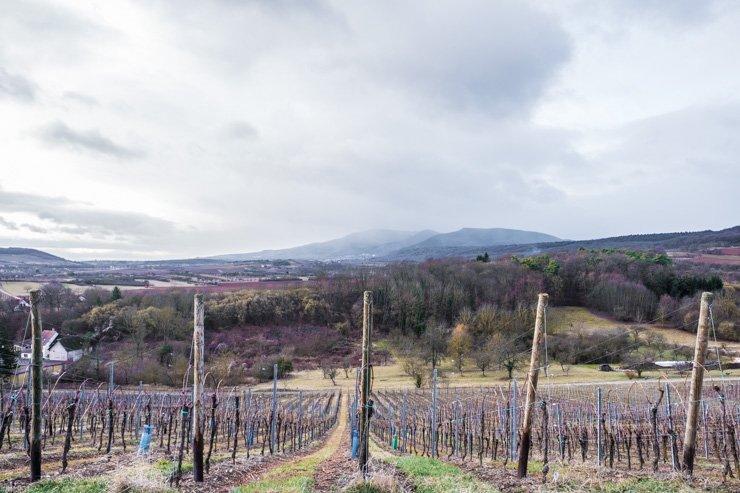View across the Kumpf et Meyer vineyards