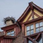 Storks' nest at top of old building, Obernai, Alsace