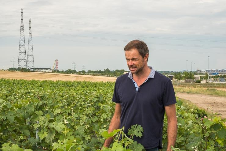 Emmanuel Brochet in Mont Benoit vineyard with pylons