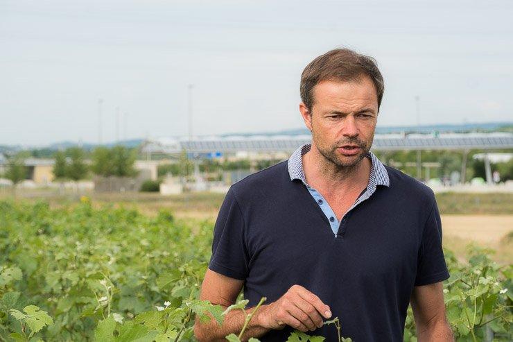 Emmanuel Brochet in Mont Benoit vineyard