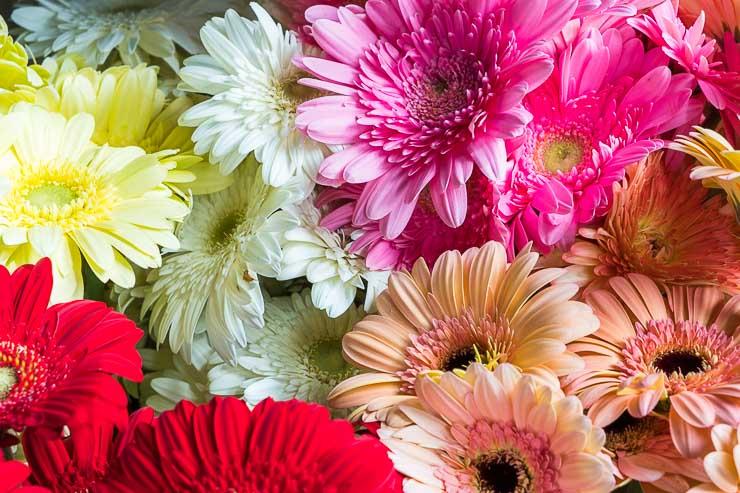 Gerbes flowers, Mauritius