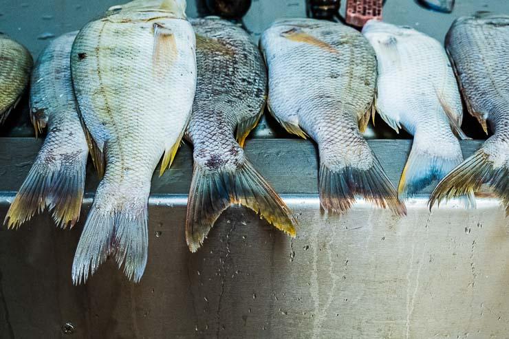 Row of capitaine fish, market, Quatre Bornes, Mauritius