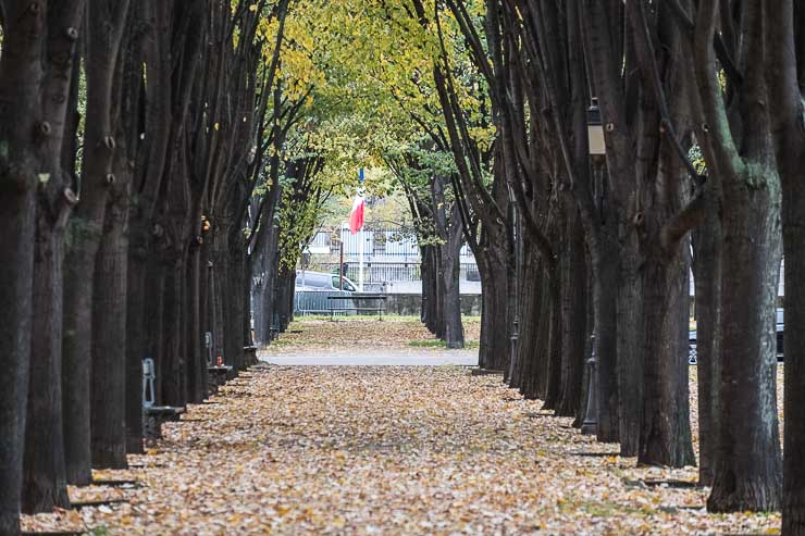 View down row of lime trees in Esplanade des Invalides, Paris