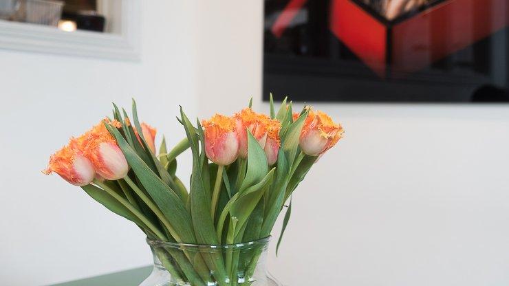 Orange tulips, Green Rabbit, Stockholm