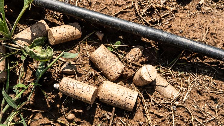 Corks on the soil with stretch of irrigation pipe.