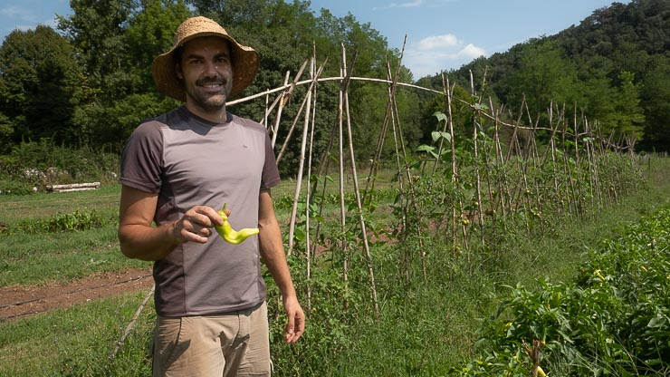 Man in straw hat with a green pepper in his hands and vegetable garden behind.