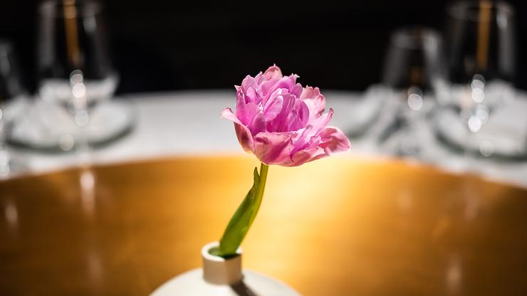 Tulip, Canton Disco, Shanghai Edition