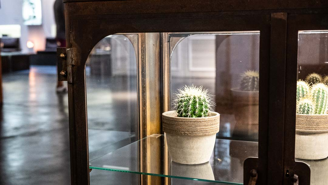 Cactus in cabinet, Madrid